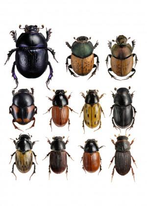 Dyngbaggar 40x40 inte tonplatta