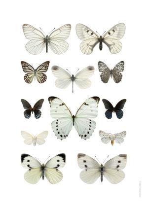 Kollage svartvit fjäril A4 utan webb