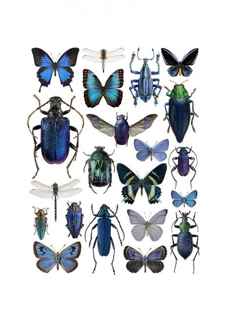 blue-4050-webb