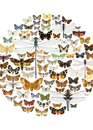 circle-of-bugs-4040-webb