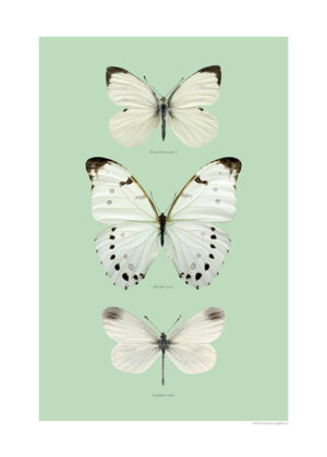 Vita fjärilar A4 grön webb