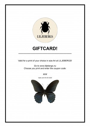 Giftcard A4
