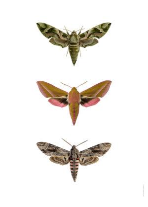 Trio moths 3040 utan webb