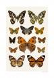 Kollage höstfjärilar A4 med webb