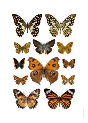 Kollage höstfjärilar A4 utan webb