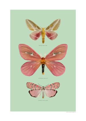 Rosa fjärilar A4 grön webb