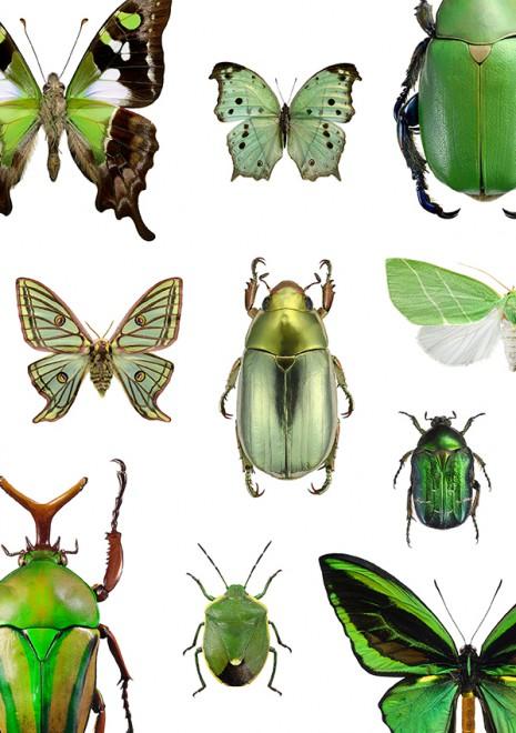 Utfallande grön A4 webb