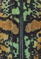 Anatragus pulchellus del