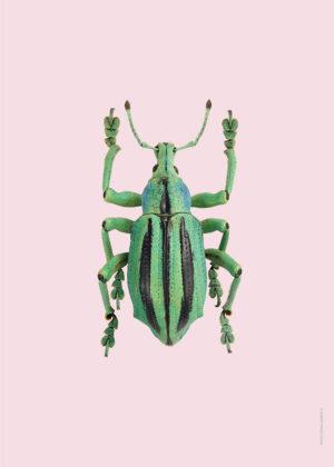 Pasteller skalbaggar