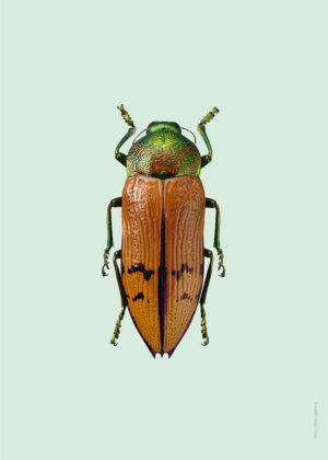 Pasteller skalbaggar2