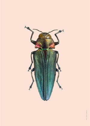 Pasteller skalbaggar3