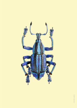 Pasteller skalbaggar4
